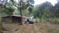 Durian Farm Tangkak For Sale